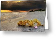 Storm And Sea Shell On Sanibel Greeting Card