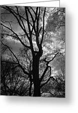 Storm Clouds And Trees Greeting Card