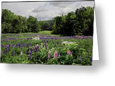 Storm In The Lupine Greeting Card