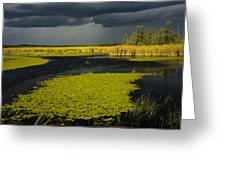 Storm Light At Patten Lake #2 Greeting Card
