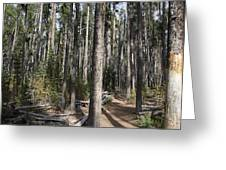 Storm Point Trail Forest Greeting Card