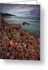 Stormy Life At Sea Greeting Card
