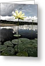 Stormy Lotus Greeting Card