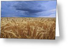 Stormy Wheat Field Greeting Card