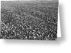Strand #6 - Beach #6 Greeting Card