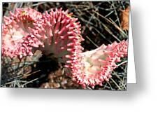 Strange Succulent Greeting Card