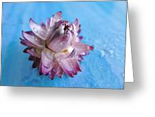 Straw Flower On Blue Greeting Card