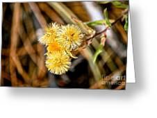 Straw Flowers Greeting Card