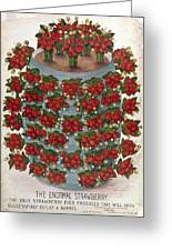 Strawberries, 1889 Greeting Card