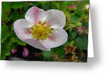 Strawberry Blossom Greeting Card