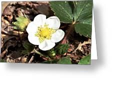Strawberry Flower 1 Greeting Card