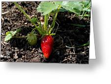 Strawberry Plant Greeting Card