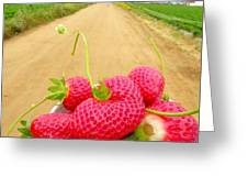 Strawberry Road Greeting Card