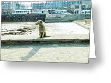 Stray By The River Signed First Edition Greeting Card