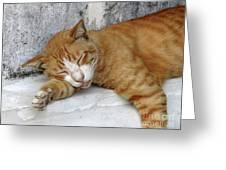 Stray Cat Sleeps On The Floor-1 Greeting Card