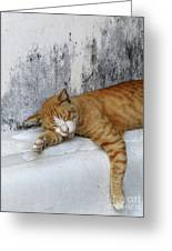 Stray Cat Sleeps On The Floor-2 Greeting Card