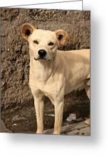 Stray White Dog Greeting Card