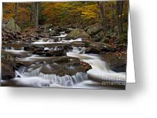 Stream At Ricketts Glen Greeting Card by Robert Wirth
