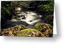 Stream In Lapland Finland Greeting Card
