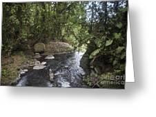 Stream In  Rainforest Greeting Card