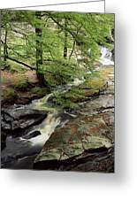 Stream In The Irish Countryside Greeting Card