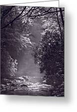 Stream Light B W Greeting Card