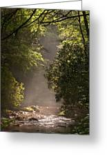 Stream Light Greeting Card by Steve Gadomski