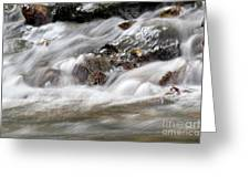 Stream Nature Spring Scene Greeting Card