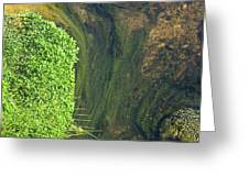 Stream Of Weeds I Greeting Card
