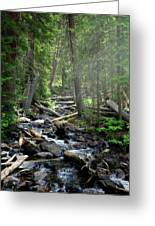 Streaming Through The Trees Greeting Card