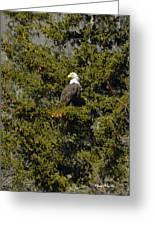 Streamside Eagle Greeting Card