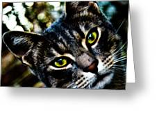 Street Cat II Greeting Card
