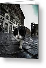 Street Cat Greeting Card