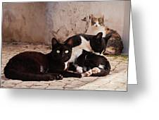 Street Cats - Portugal Greeting Card