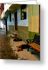 Street Dogs Greeting Card