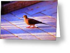Street Dove Greeting Card