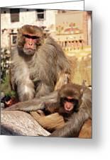 Kathmandu Street Monkeys  Greeting Card