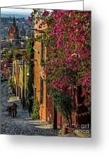 Streets Of San Miguel Greeting Card