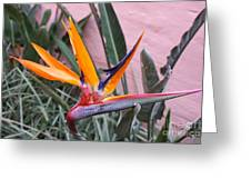 Strelitzia Double Bloom Greeting Card
