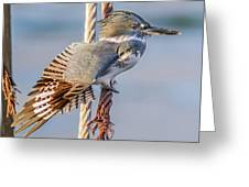 Stretching Kingfisher Greeting Card