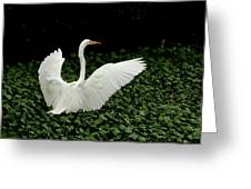 Stretching My Wings Greeting Card