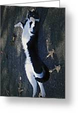 Stretchy Cat Greeting Card