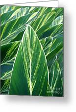 Striated Greens Greeting Card