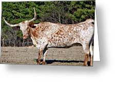 Strike A Pose - Longhorn Style Greeting Card