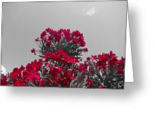 Striking Red  Greeting Card