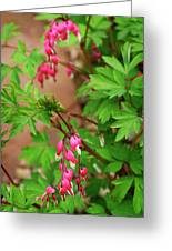 String Of Bleeding Hearts Greeting Card
