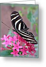 Striped Beauty - Butterfly Greeting Card