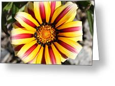 Striped Daisy Square Greeting Card