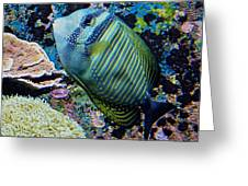Striped Fish Greeting Card