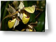 Striped Orchid Greeting Card